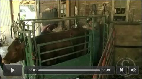 Haley Farms on RFD's Cattlemen to CAttlemen